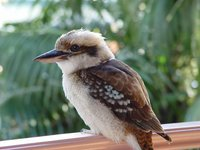 Other Australian Native Bird Nesting Boxes For Sale